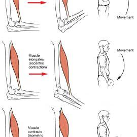 Kako sprečiti i lečiti upalu mišića