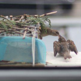 Hranilica za ptice (vrapce) otporna na golubove